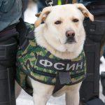 Фото: Интерпресс, Сергей Куликов/ТАСС